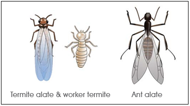 Termite Xterm Defence Against Termites